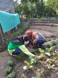 Bertanam Organik Di Masa Pandemi